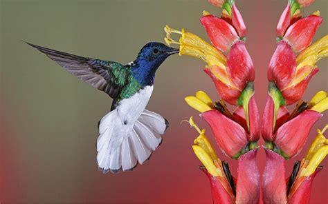 colibri bird wallpaper wallpapers9