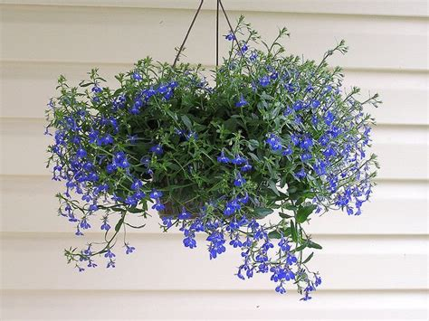 best small hanging plants top 10 flowering plants for hanging baskets