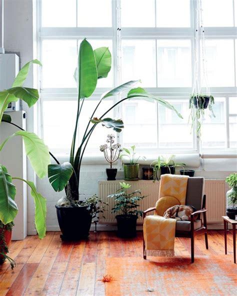 indoor plants alive  everygirl