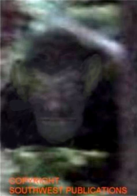bigfoot 5 monster 732 best images about wierd creepy and alien on