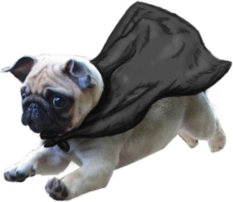 flying pugs quot flying pug quot stickers by susquash redbubble