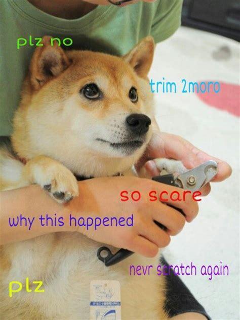 Shiba Meme - doge meme shibe dog