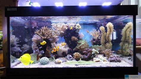 led aquarium beleuchtung meerwasser entwicklung eines meerwasseraquariums unter der led