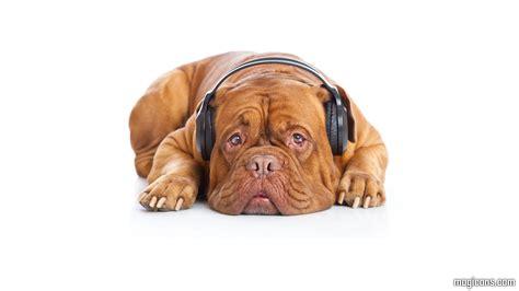 puppy with headphones with headphones