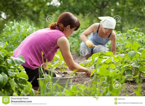 Is Working In The Garden by Working In Vegetable Garden Stock Image Image