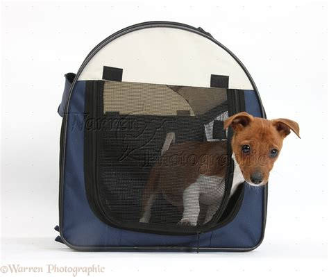 puppy purse puppy carrier purse carriers designer small bags carrier backpack