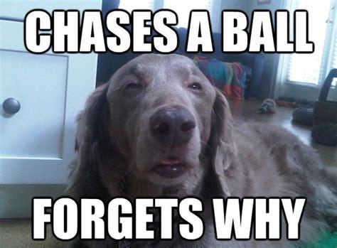 Memes Com Funny - funny dog memes fun