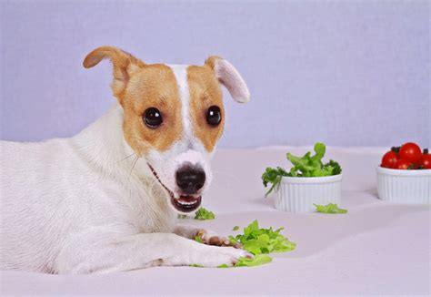 vegetarian dogs stop if you are a vegetarian best top care with dogs