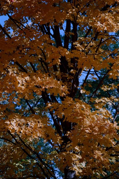 quotes about fall colors quotesgram autumn color quotes quotesgram