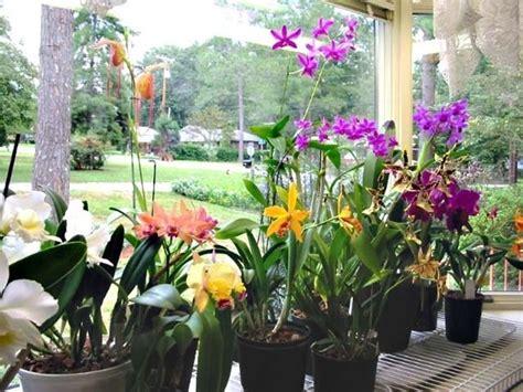 orchidee in casa orchidee cura orchidee cura delle orchidee