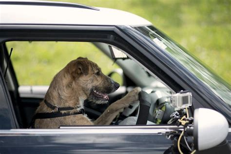 driving dogs car commercial autos post