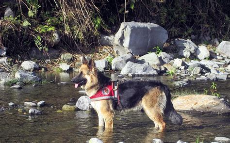 The Struggle To Keep Search And  Ee  Rescue Ee    Ee  Dogs Ee   In Nepal