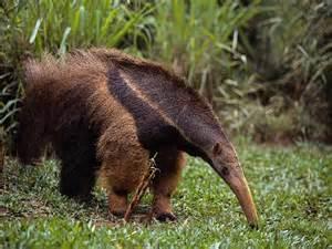 animals pictures uneedallinside animal affrican animals
