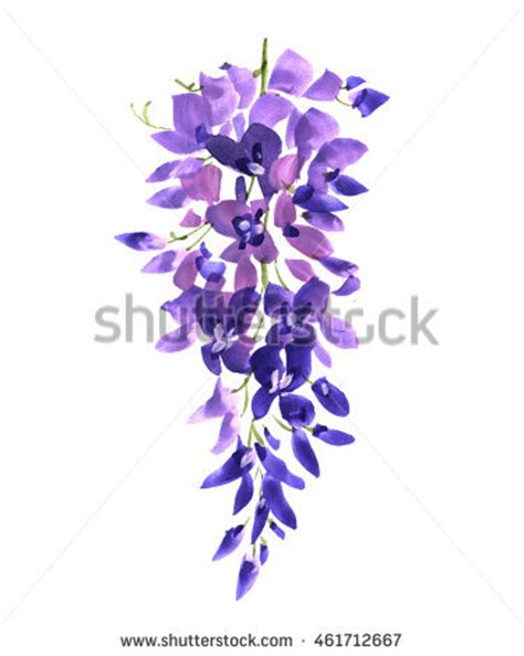 copy right free pictures of purple wisteria watercolor wisteria flower background nature stock illustration 461712667