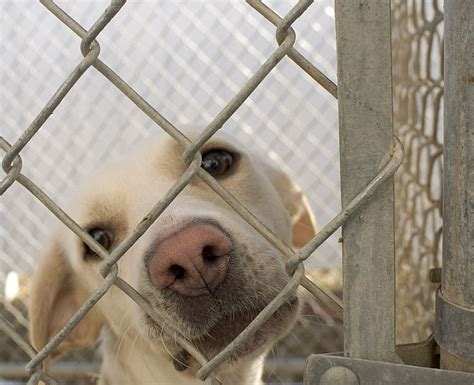 shelters in iowa file in animal shelter in washington iowa jpg wikimedia commons