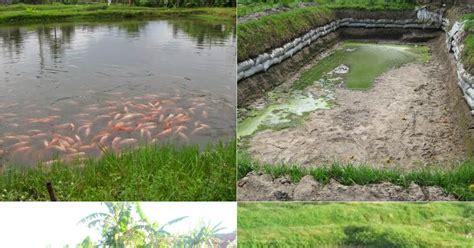 Jual Bibit Ikan Nila Area Kudus cara budidaya ikan air tawar pada kolam tanah mina kalibayem