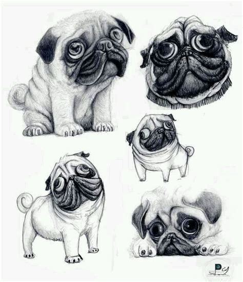 pug sketch 17 best images about drawings on and
