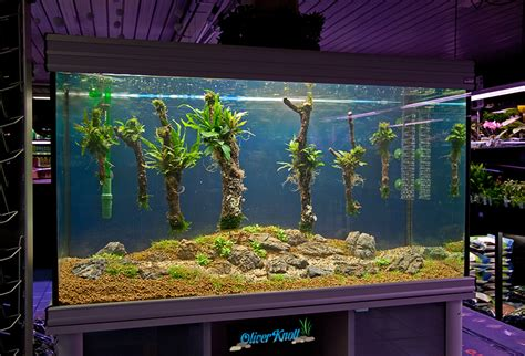 oliver knott aquascaping quot the 7 floating trees quot by oliver knott photo oliver