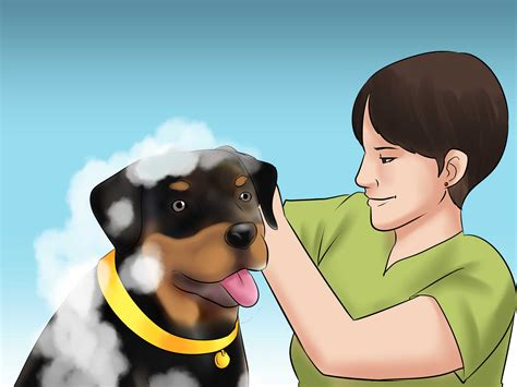 caring for rottweilers how to if you can care for a rottweiler 14 steps