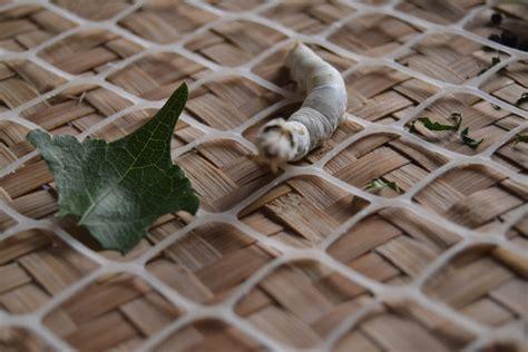 baco da seta residence a baco da seta a treviso e partono i corsi di formazione