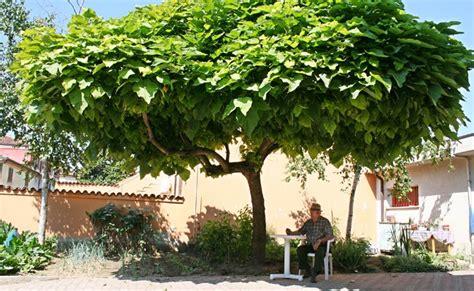 piante antizanzare da giardino catambra pianta antizanzare fai da te in giardino