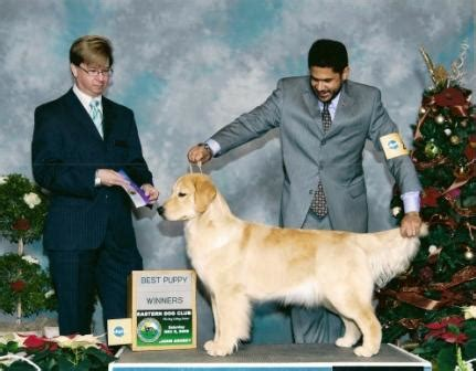 toryglen golden retrievers yukon golden retrievers and bulldogs retired goldens