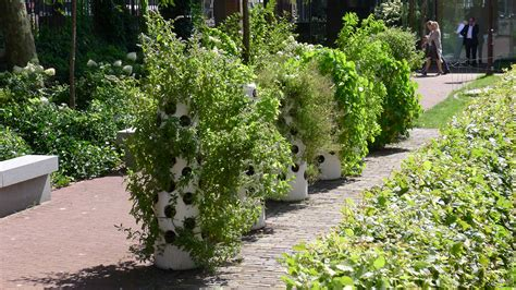 vertical garden buy 28 images vertical garden products