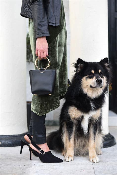 puppy crush crush heels images usseek