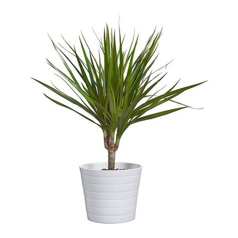 ikea plants ikea kardemumma ceramic white flower plant pot package