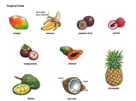 fruit dictionary banana noun definition pictures pronunciation and