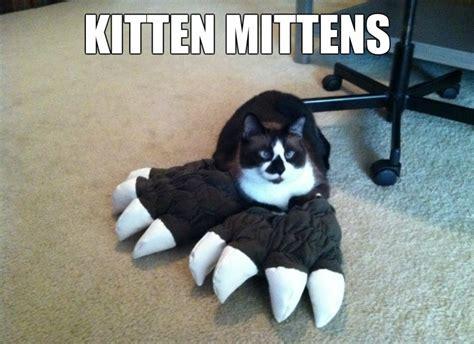 Kitten Meme - funny kitten memes