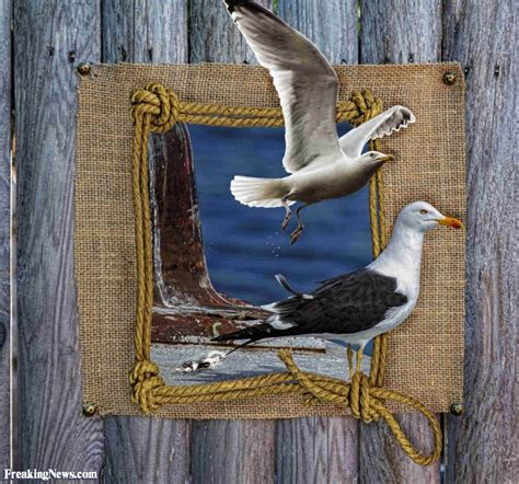 Picture Wall Decor Funny Nautical Pictures Freaking News