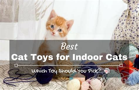 best cat toys for indoor cats which toy should you pick tinpaw