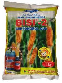 Benih Jagung Bisi 222 jagung hibrida budidaya jagung hibrida