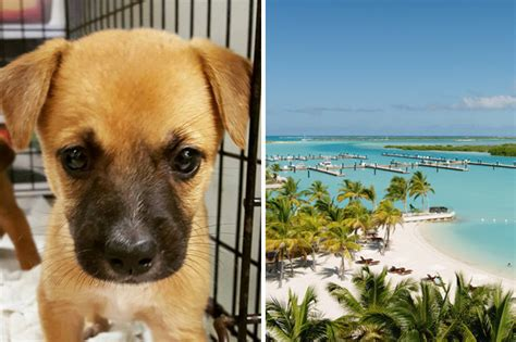 puppy island turks and caicos there s an island in turks and caicos where you can play with puppies daily