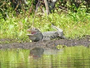 Florida wildlife threerobertshomeschool