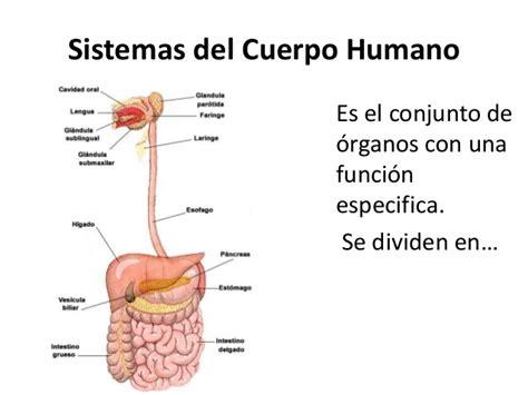 imagenes de los nombres del cuerpo humano en ingles sistemas cuerpo humano
