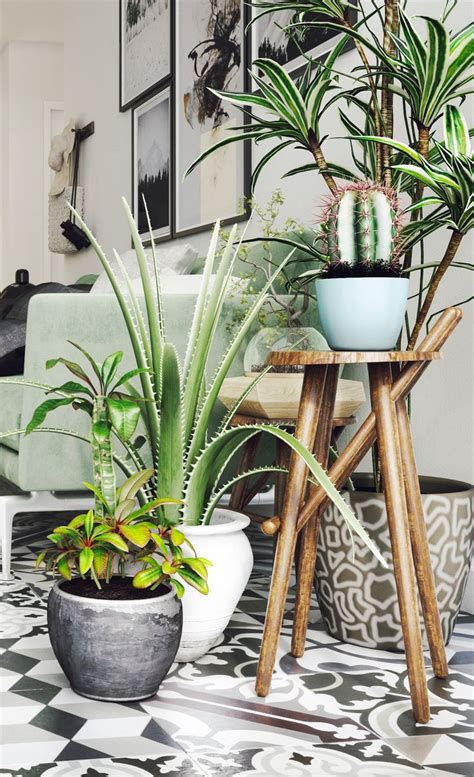 Plant Home Decor by Best 10 Indoor Plant Decor Ideas On Plant