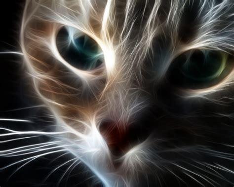 imagenes en 3d manga gatos en 3d imagenes imagui
