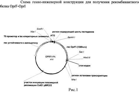 protein of pseudomonas recombinant plasmid ppa oprfi dna coding hybrid