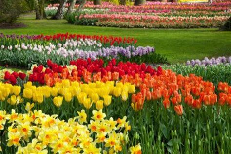 colorful flower garden 화려한 꽃밭 봄 무료 사진 무료 다운로드