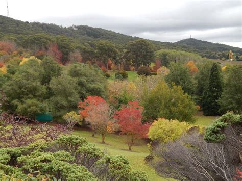 Mount Lofty Botanic Gardens Mt Lofty Botanic Garden Adelaide By Wendy