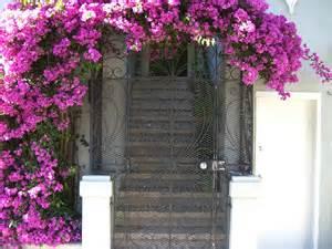 10 Best Flowering Vines For Arches, Pergola, Arbor and