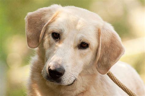 tiere suchen ein zuhause hunde tiervermittlung tiere suchen ein zuhause