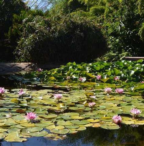 Botanical Garden Encinitas San Diego Botanic Gardens Encinitas Ca California Beaches