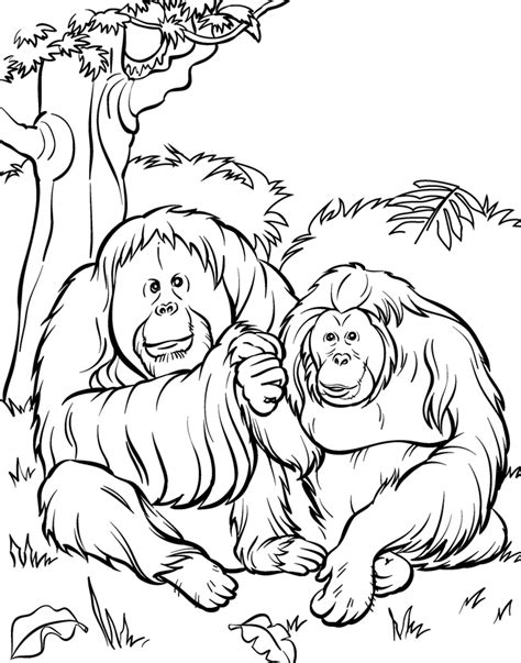 coloring pages for zoo animals free printable zoo coloring pages for