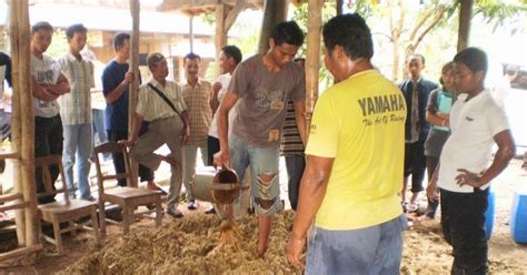 Fermentasi Pakan Ternak Ayam cara pembuatan pakan ternak babi fermentasi ragam cara