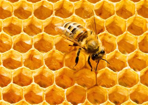 Honey Comb Honeycomb hexagons are the most scientifically efficient packing shape as bee honeycomb proves