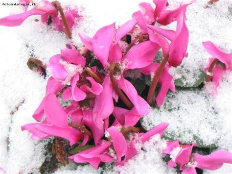fiori di inverno fiori d inverno