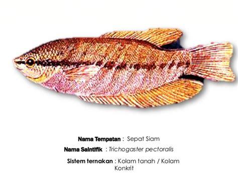 5 in 1 set pembersih tanki ikan ternakan ikan air tawar ting 2